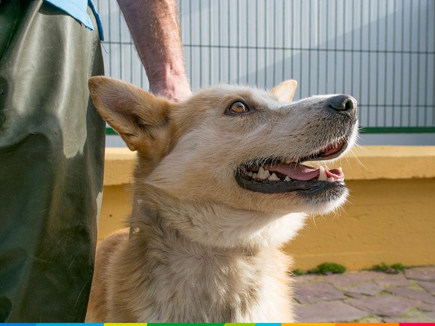Este perro fue recogio de un municipio alavés en los últimos días.